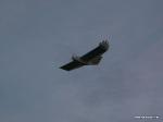 depron-eagle-airborn-03