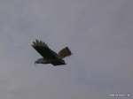 depron-eagle-airborn-04