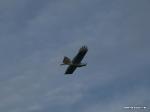 depron-eagle-airborn-05