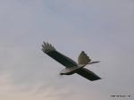 depron-eagle-airborn-06