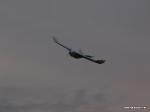 depron-eagle-airborn-07